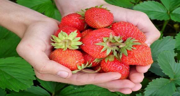Dieta Macrobiótica para Adelgazar | Pros y Contras