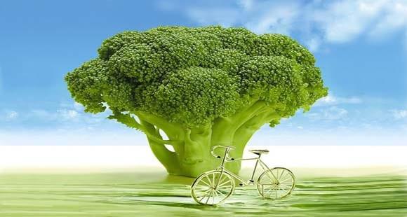 Deliciosas recetas con brócoli