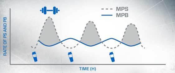 sintesis de la proteina
