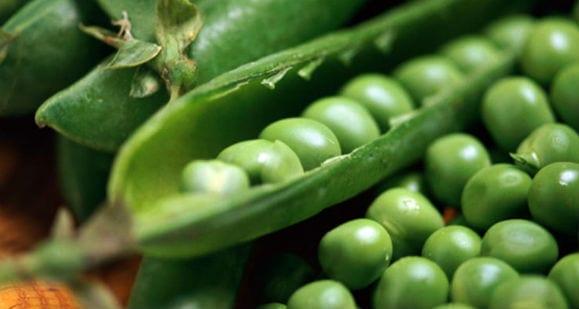 Proteína de guisante | Nueva forma incluir proteínas en tu dieta