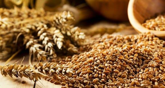 cereales granos de trigo