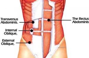 musculos del core
