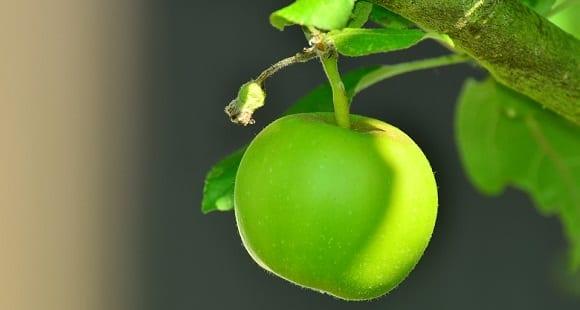¿Qué es la Fibra? Beneficios, Alimentos y Suplementos