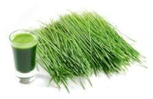 hierba de trigo en polvo