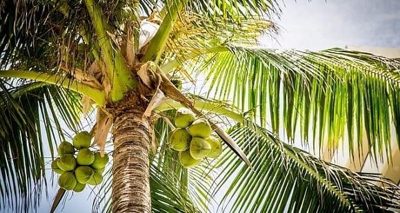 ¿Cómo usar Correctamente el Aceite de Coco Orgánico?