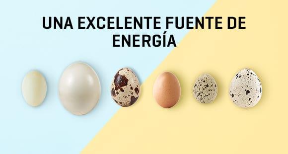Especial de Pascua: Huevos | Beneficios y Tipos
