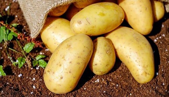 alimentos ricos en carbohidratos como la patata