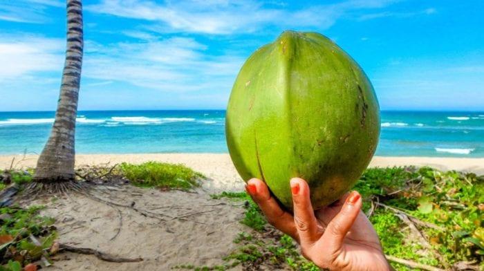 Propiedades y beneficios de la Harina de Coco