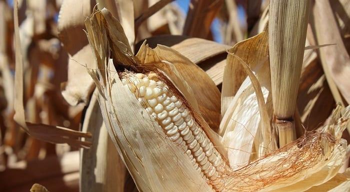 harinas sin gluten de cereales