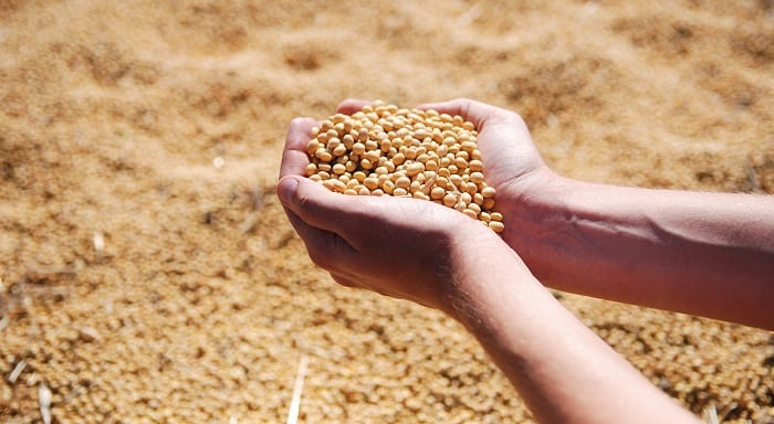 harinas sin gluten de legumbres