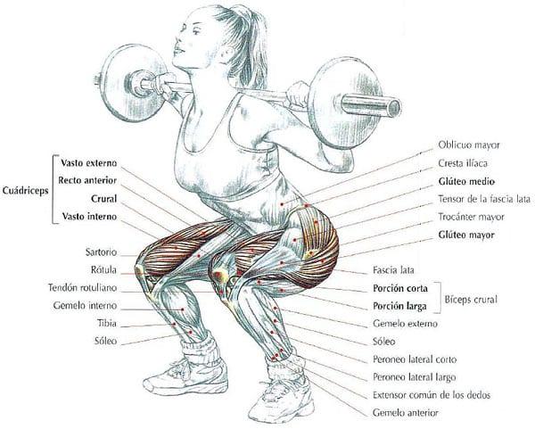 músculos sentadillas