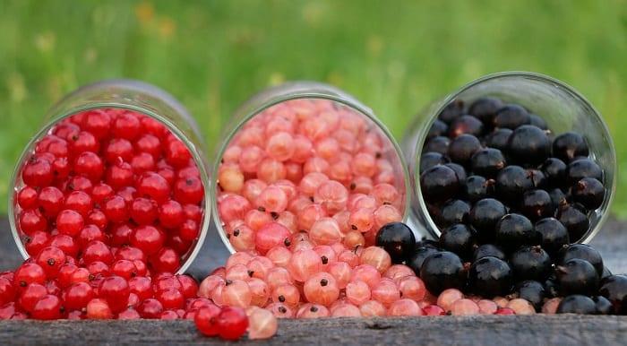la grosella y las frutas con menos calorías