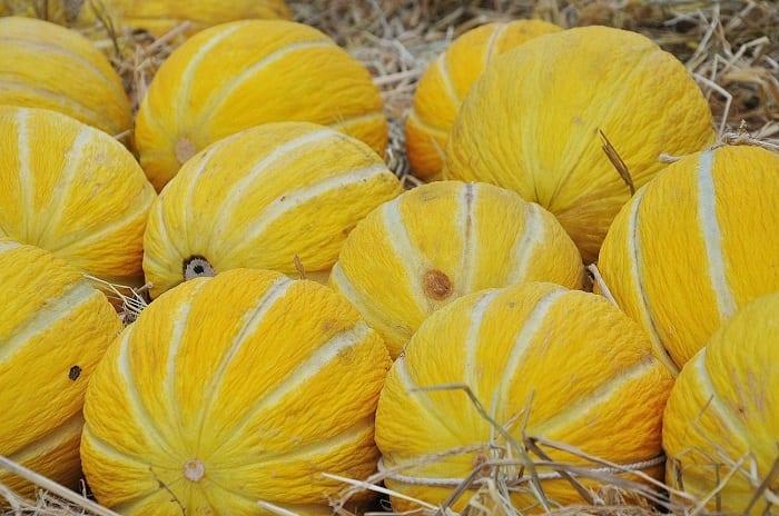propiedades del melón amarillo