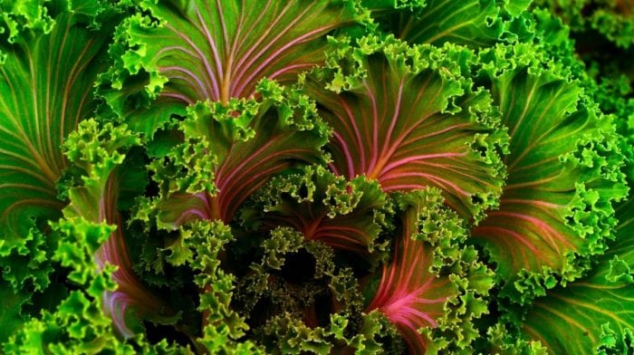Chips Kale | 9 Beneficios