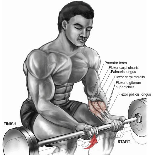 allenamento avambracci