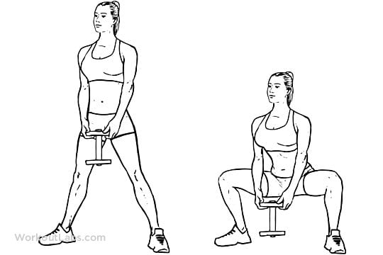 muscoli adduttori