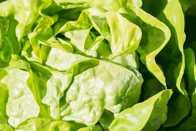 verdura fa dimagrire