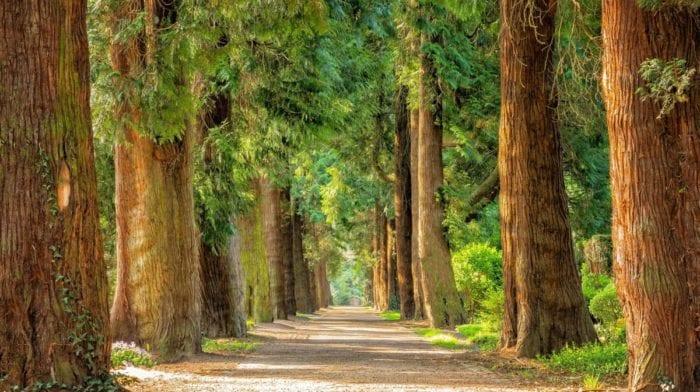 Allenamento al parco | 5 esercizi che devi conoscere