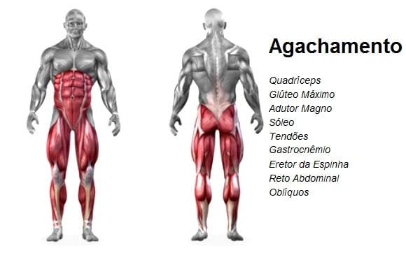 músculos trabalhados no agachamento