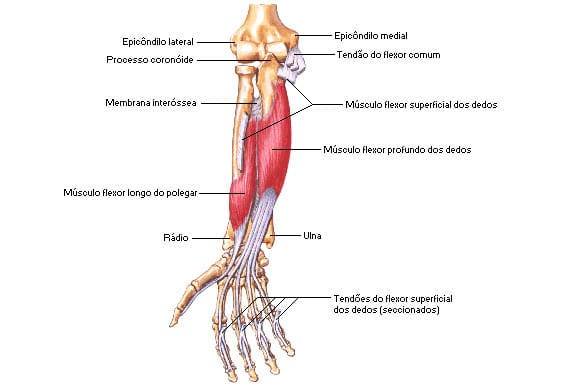 Os músculos do braço | Bíceps e Tríceps MYPROTEIN™