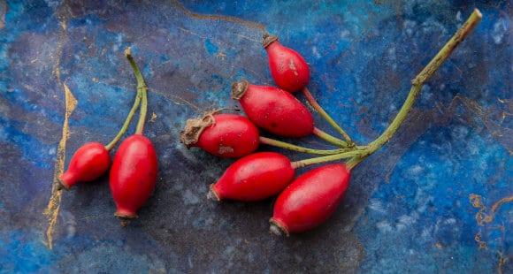 Quadril de rosa – o fruto da roseira | Benefícios