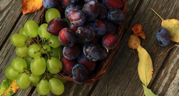 grapesed