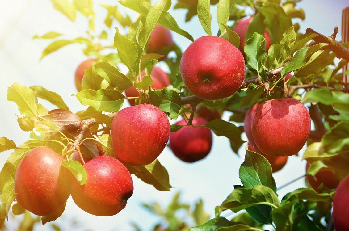 Appels, Apples, Appel recepten, appel recept, aple, apel