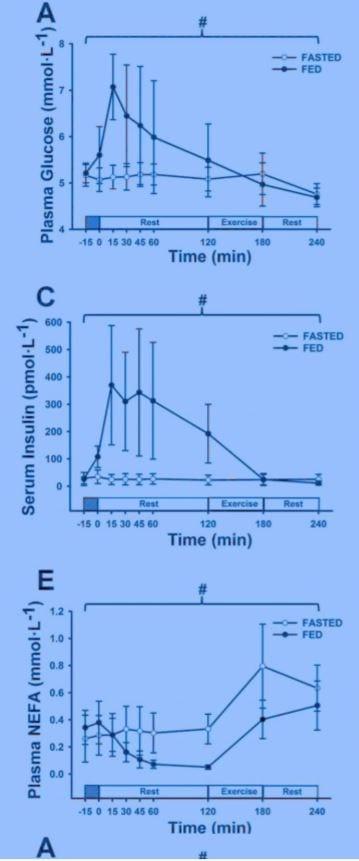 wel of niet eten voor het sporten onderzoek myprotein blog