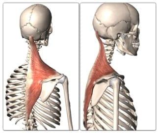 Skeleton Traps