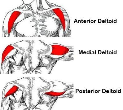 The Dumbbell Lateral Raise Exercise | Proper Form & Technique