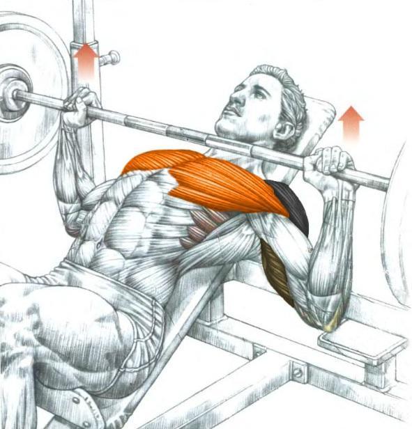incline bench press