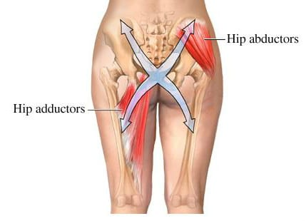adductor and abductor muscles