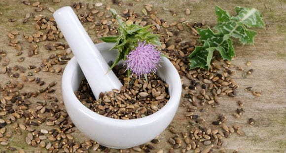 Milk Thistle   The Cure Of Many Ailments