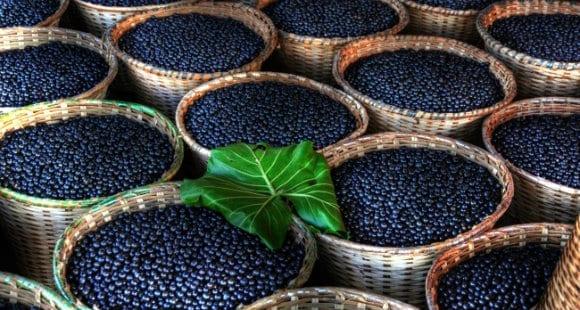 What Is Maqui Berry Powder Benefits Usage Myprotein