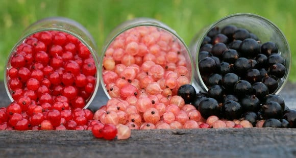 Add Superfoods To Your Diet | See The Benefits