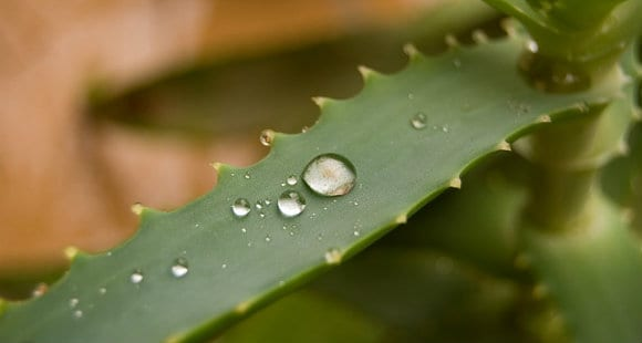 Aloe Vera | What Are The Benefits Of Supplementation?