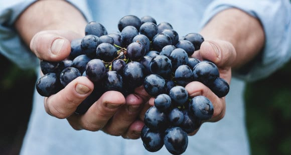 Grape Seed Extract | What Are The Benefits?