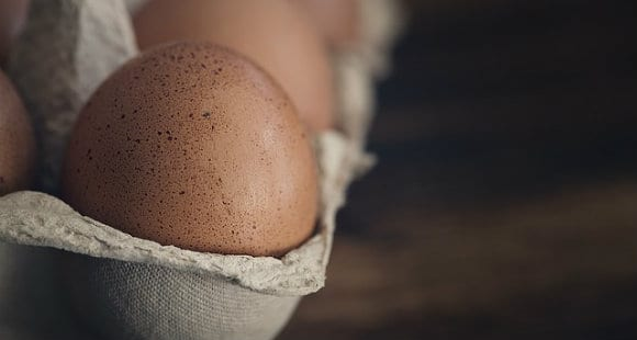 Egg Protein | White Or Yolk?