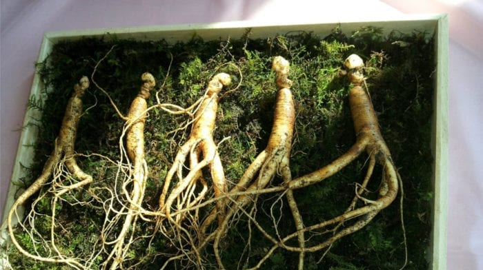 Korean Ginseng | Benefits & Side Effects