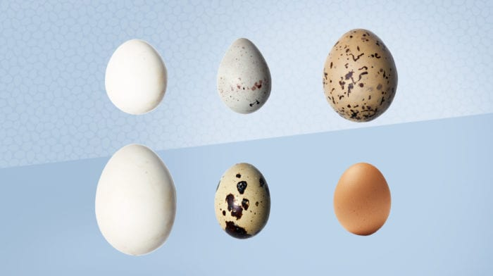 The Benefits Of Eggs At Easter | An Eggcellent Source Of Protein