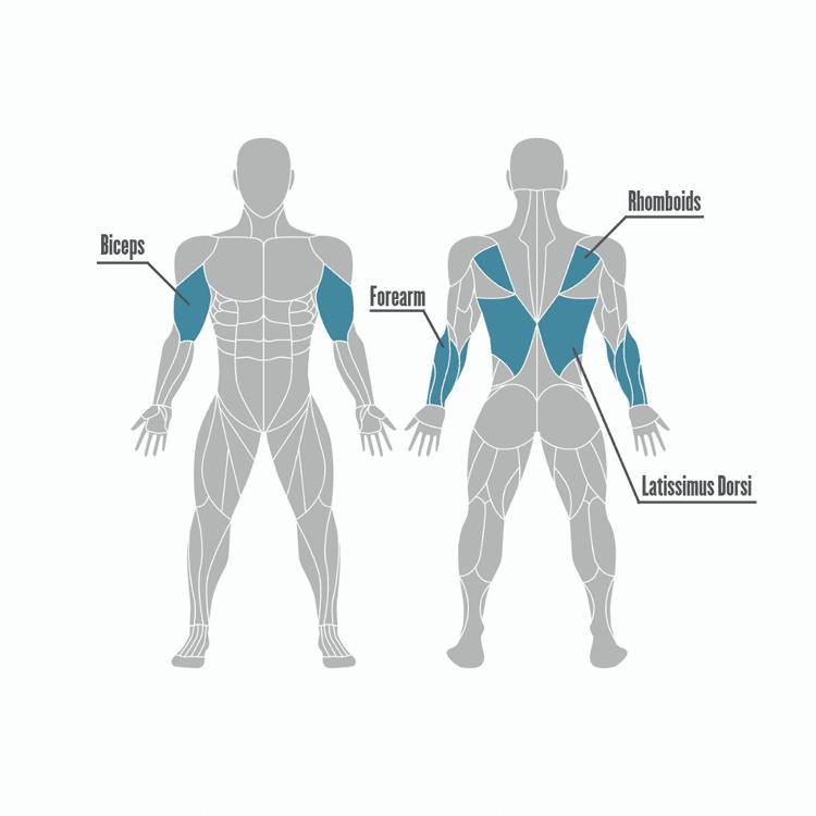 Os benefícios daelevação na barra fixae os grupos musculares utilizados