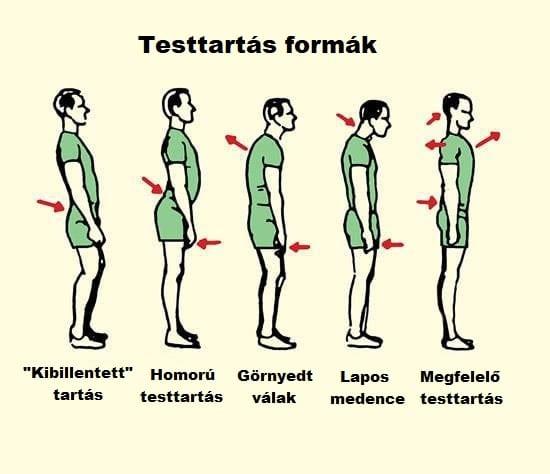 Gerinc testtartás formák