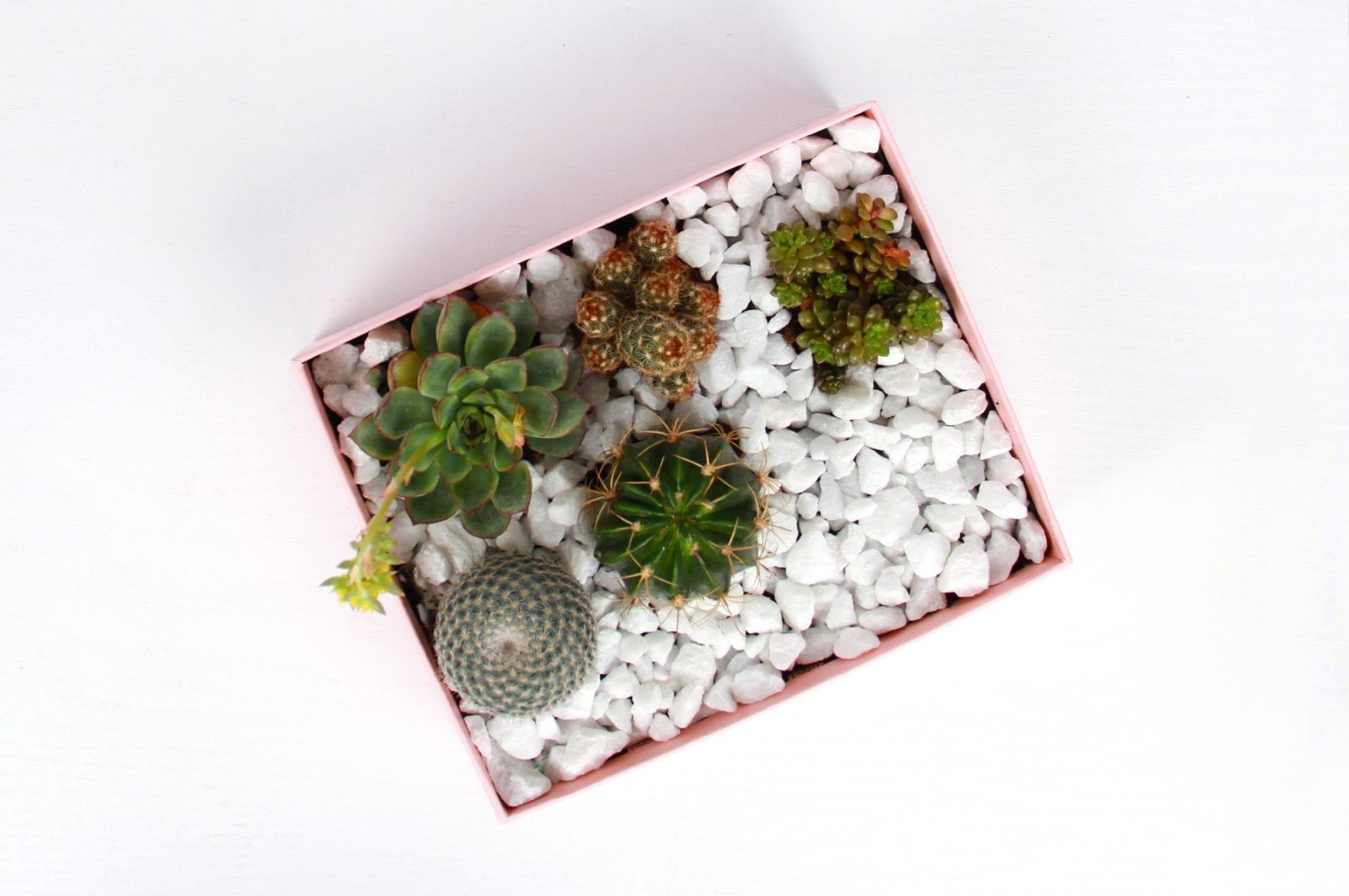 upscale-glossybox-terrarium-step-four