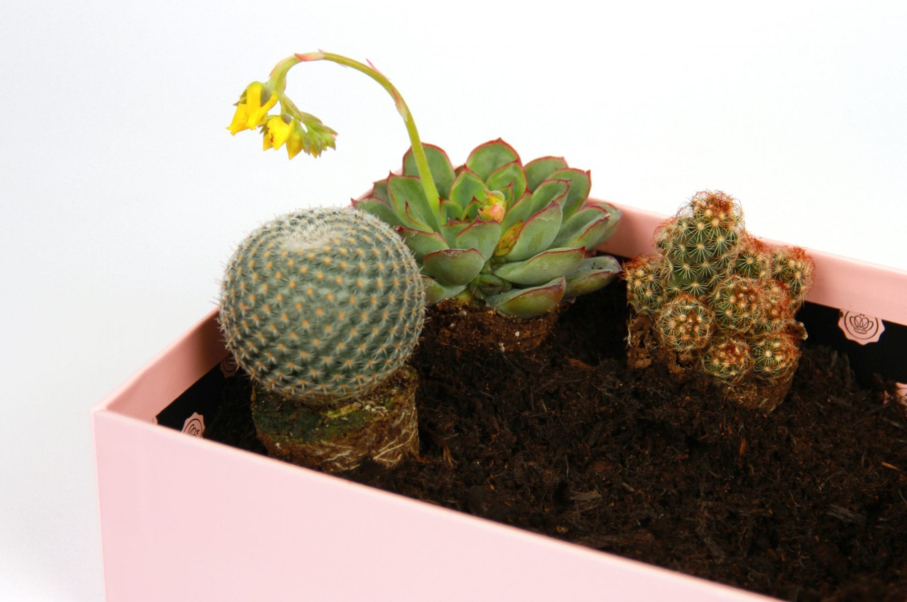 upscale-glossybox-terrarium-step-three