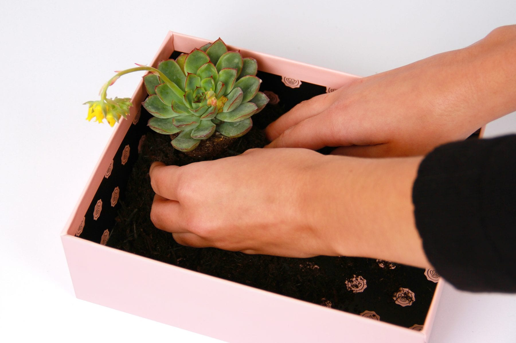 upscale-glossybox-terrarium-step-two
