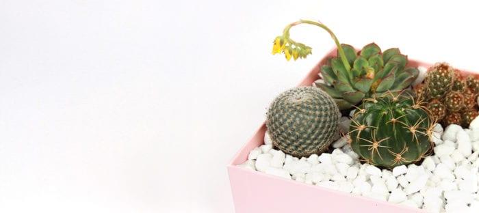 Upscale Your Glossybox: Succulent & Cactus Terrarium