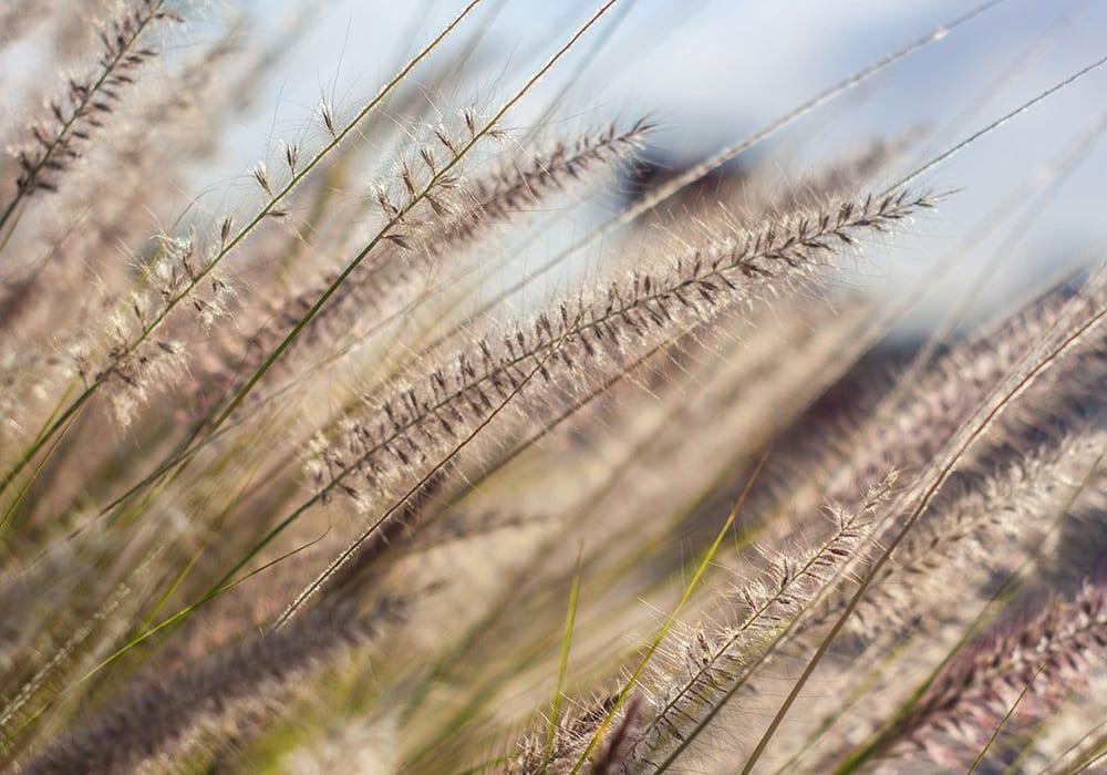 Frühlingsanfang_Pollen_Wind