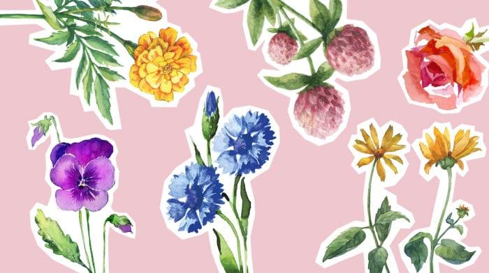 Blumen machen sch?n: So bringen dich echte Blüten zum Erblühen!