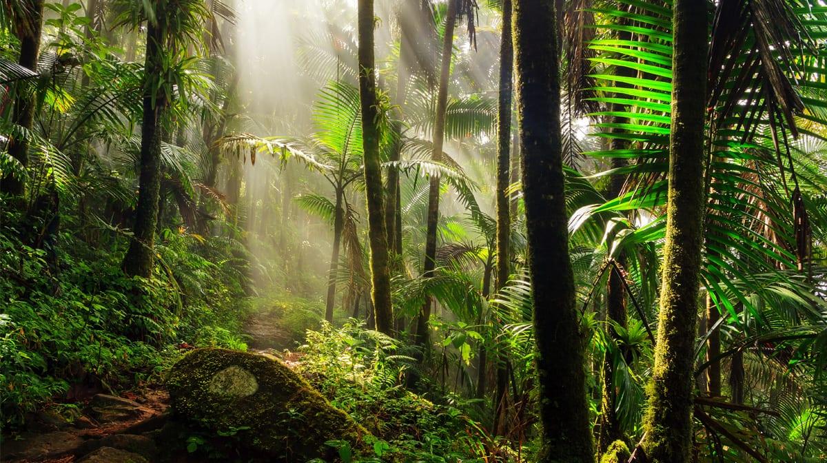 Dschungelfieber: Hier sind 7 der schönsten Regenwald-Reiseziele der Welt!
