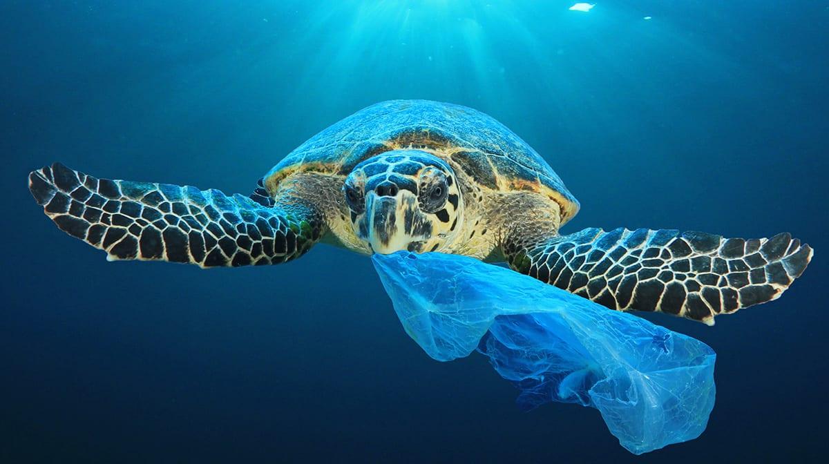 #avoidplastic! Mit diesen Tipps lebst du plastikarm und trotzdem schön